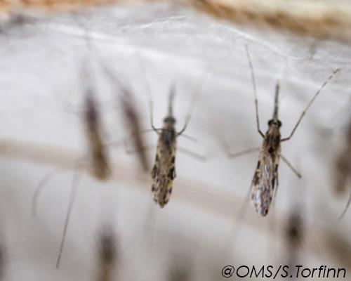 OMS : un nouveau plan de lutte contre le paludisme