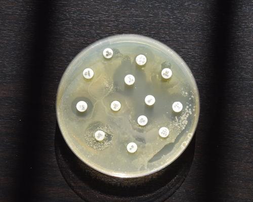 Intelligence artificielle :  un allié contre l'antibiorésistance !