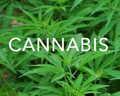 """Le terme cannabis """"thérapeutique"""" jugé abusif par l'Académie de pharmacie"""
